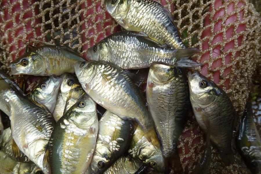 fischversand ab dienstag wieder m glich